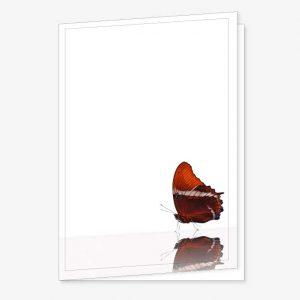 Rouwkaart Vlinder