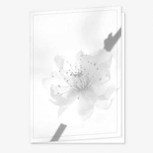 Rouwkaart met bloesem