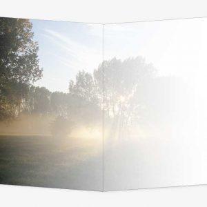 Rouwkaart Boom met zonnestralen