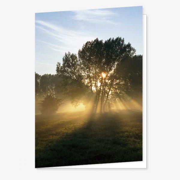 ad_23_02_boom-zonstralen_rouwkaart