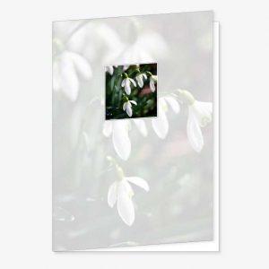 Rouwkaart Sneeuwklokje